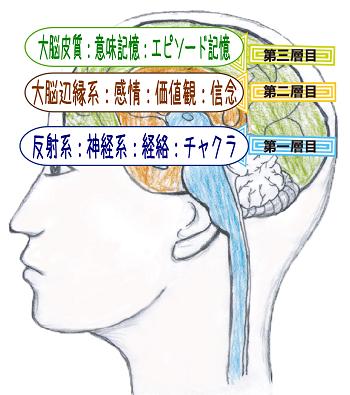 脳の三層構造
