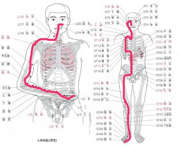 大腸経胃経1