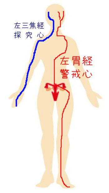 胃経三焦経