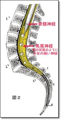椎孔矢状面